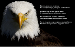 Ultra-HD-Eagle-Wallpaper